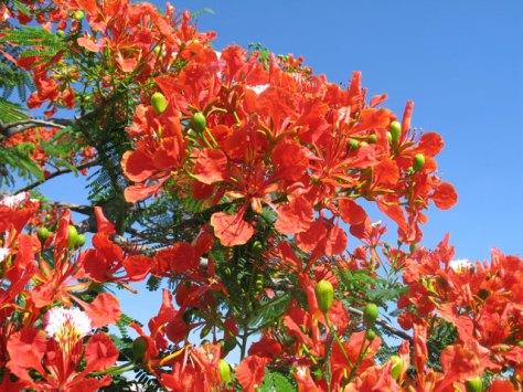 flower_d001